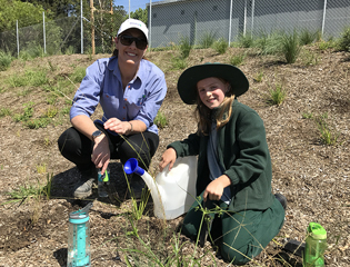 Native seedlings for Macdonaldtown remediation